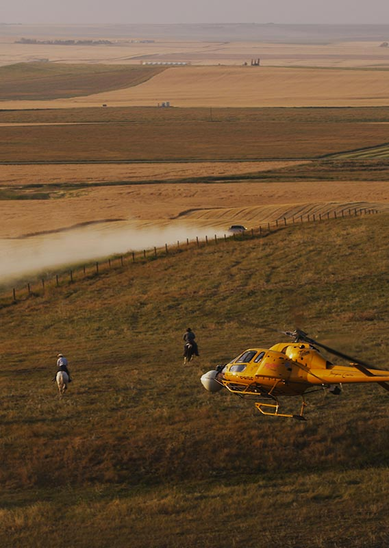 A helicopter flies over a group of ranchers and cattle over grasslands.